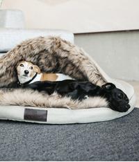 Hundebetten / Kissen