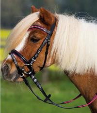 für die Ponys