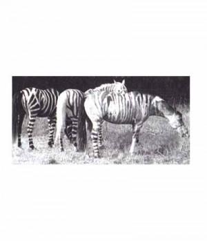 Waldhausen Zebra Insektenspray regenresistent SP