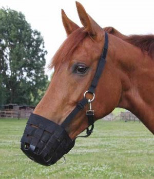 in Pony-, Vollblut- und Warmblut-Größe