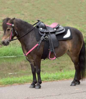 Waldhausen Western Blanket Idaho Pony