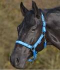 Waldhausen Nylonhalfter mit Pferdchenband - azurblau