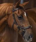 Horseware Trense Micklem Multibridle Rambo - braun