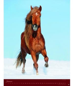 Hippobook Kalender 2019 Pferde Classics