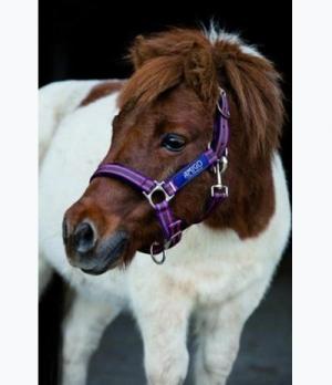 Horseware Halfter Amigo Nylon Sale 16,95€