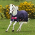 Horseware Turnoutdecke Amigo Hero 900D Pony light - grape/pink