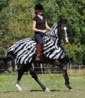 Bucas Ekzem-Ausreitdecke Buzz-Off Riding - Zebra