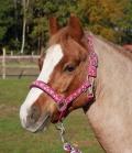Busse Halfter Flying Pony doppeltes Nylon - pink