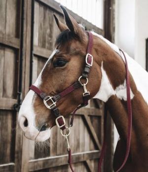 Kentucky Horsewear Halfter Artificial Leder Nylon geflochte