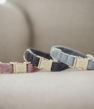 Kentucky Dogwear Hundehalsband Wool