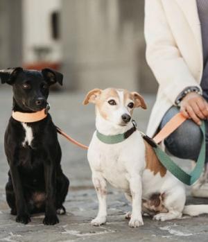 Kentucky Dogwear Hundehalsband Jacquard