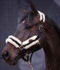 Kentucky Horsewear Halfter Nylon Lammfell - schw.natur