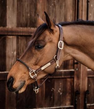 Kentucky Horsewear Halfter Leder Nasen Rope Kontrollhalfter