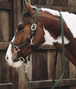 Kentucky Horsewear Führleine Artificial Leder Nylon gefloch