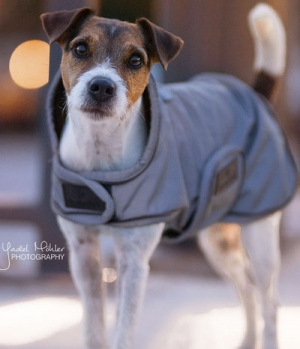 Kentucky Dogwear Hundemantel reflektierend wasserabweisen