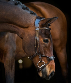 PS of Sweden Trense High Jump spezial Bridle