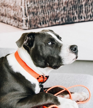 Kentucky Dogwear Hundehalsband soft rubber