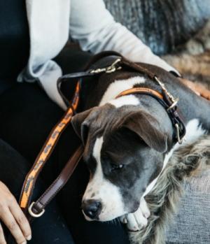 Kentucky Dogwear Hundeleine handgemacht Pearls