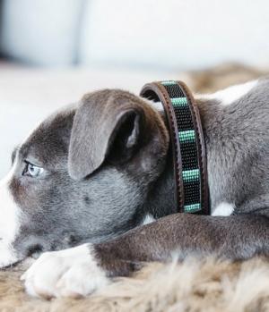 Kentucky Dogwear Hundehalsband handgemacht Pearls