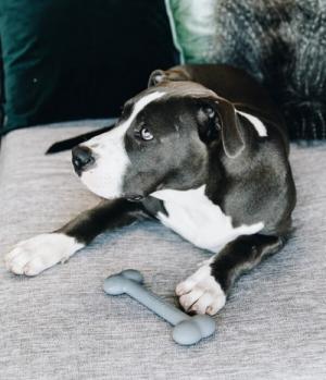 Kentucky Dogwear Hundespielzeug Silikon Knochen grau