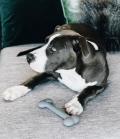 Kentucky Dogwear Hundespielzeug Silikon Knochen grau - grau