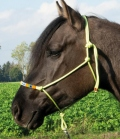 Wildhorn Knotenhalfter Beads mit Perlen - limone