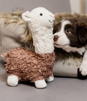 Kentucky Dogwear Hundespielzeug DogToy Alpaka Alfredo