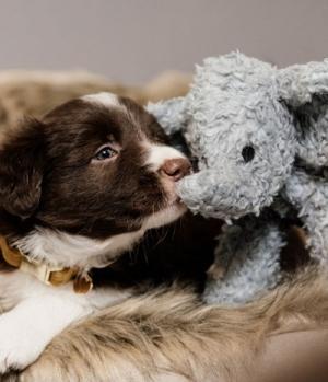 Kentucky Dogwear Hundespielzeug DogToy Elefant Elsa