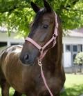 Covalliero Halfter Nylon Dornschnalle Messingösen - rosa