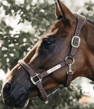 Kentucky Horsewear Halfter Anatomisch Wildleder