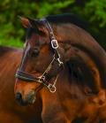 Horseware Halfter Rambo Nylon Fleece unterlegt - white gold