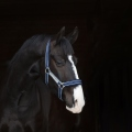 Horseware Halfter Rambo Nylon Fleece unterlegt - navy-beige